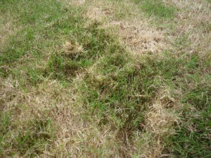 Signs that your grass water might need watering