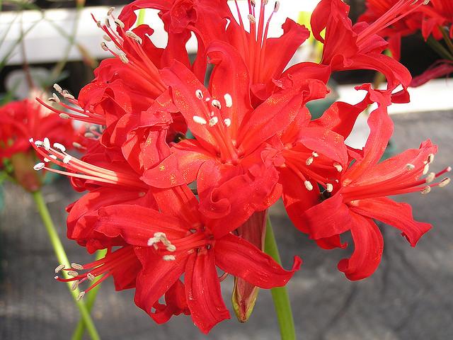 autumn flowers to plant now edecks