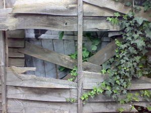 Broken Fence Panel to fix