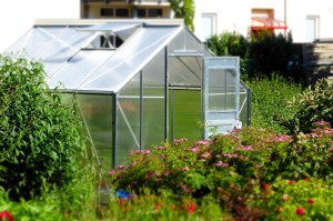 greenhouse-827464_1280
